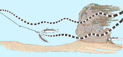 diagram of lure following an up and down path being chased by two bass